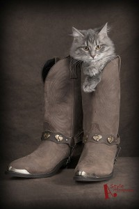 a-style-photography-cat-in-boots-portrait